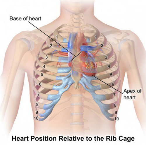 Where is your heart located and what causes chest pain updated position of heart inside the rib cage heart location ccuart