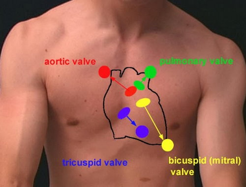 Where is your heart located and what causes chest pain updated the exact location of heart in human body ccuart Gallery